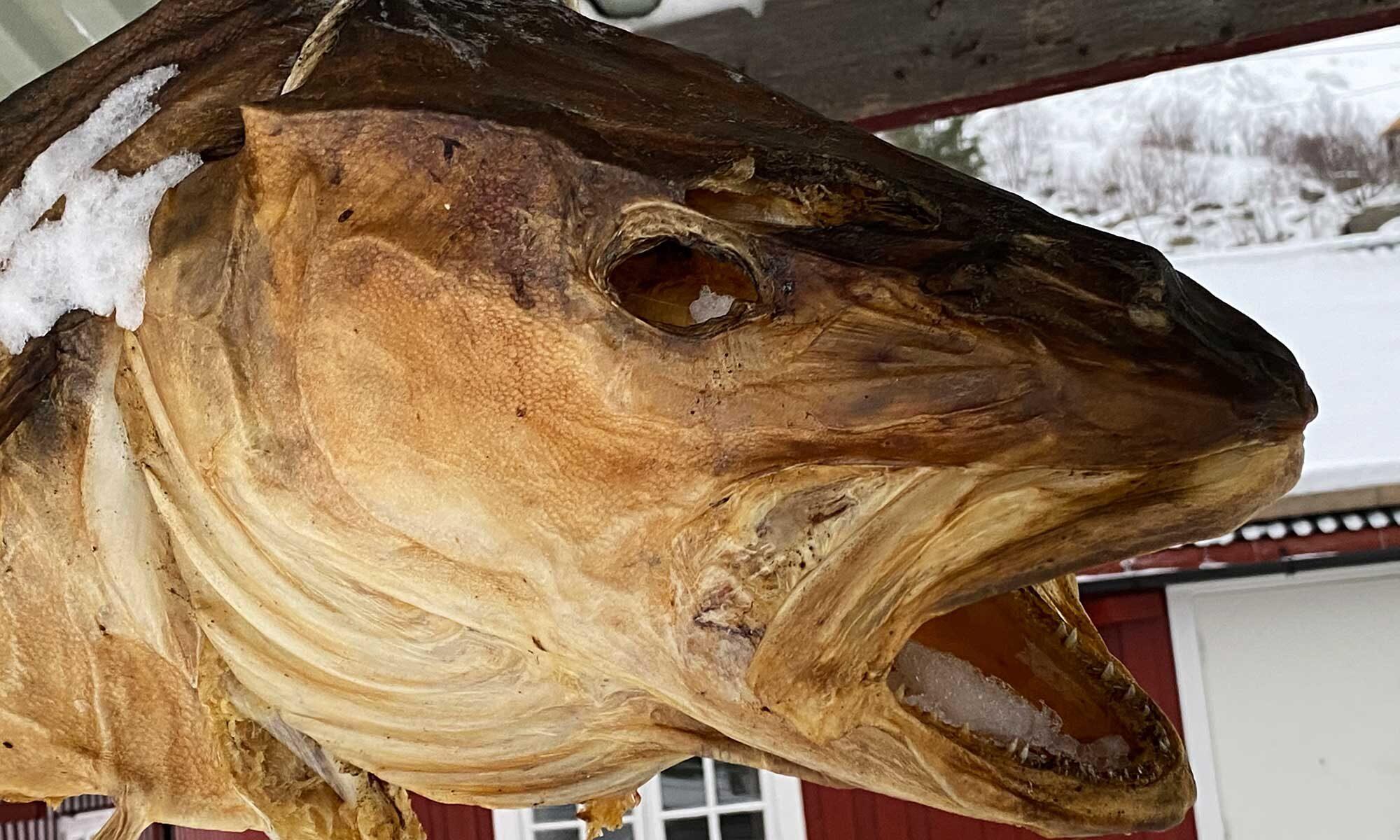 Das Bild zeigt einengetrockneten Fisch