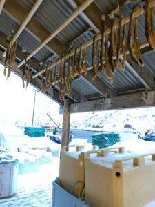 Magerøya, Honningsvåg, Norwegen, Stockfisch