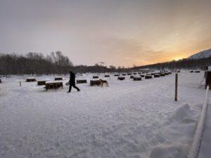 Huskys im Snowhotel Kirkenes, Finnmark