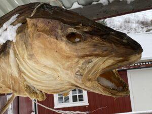 getrockneter Fischkopf
